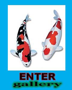 enter_gallery